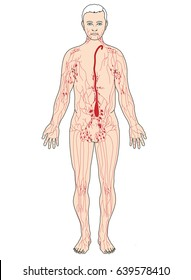 Main lymph nodes and lymph vessels including the cisterna chyli and thoracic duct