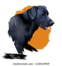 Majorca shepherd dog, perro de pastor mallorquín digital art illustration. Pet originated in Spain, domestic animal mammal showing tongue. Ca de bestiar medium-sized canine breed with black fur