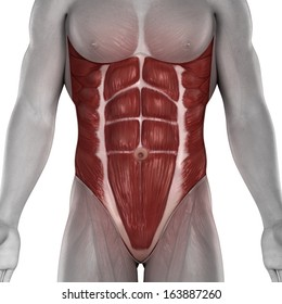 Abdominal Muscle Images, Stock Photos & Vectors | Shutterstock