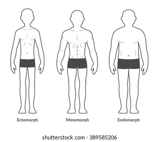 Male body types: Ectomorph, Mesomorph and Endomorph. Skinny, muscular and fat physique. Isolated medical illustration.