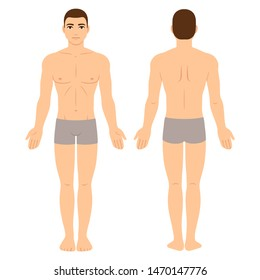 Male body in underwear, front and back view. Athletic young man physique, clip art for medical infographics and fashion illustration.