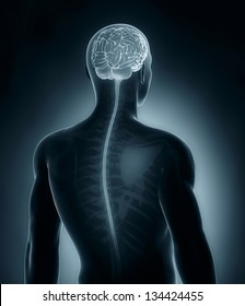 Male Brain and spinal cord medical x-ray scan