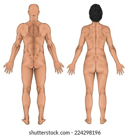Male female anatomical body, surface anatomy, human body shapes, human anatomy, anterior posterior view, full body