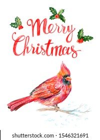 Male North American Cardinal. Red bird. Merry Christmas Greetings. Drawing with colored pencils.