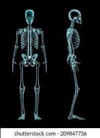 Male skeleton full body x-ray