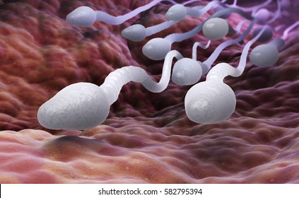 Male sperm cells. 3D illustration