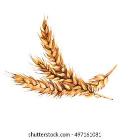 Malt ears. Isolated on a white background. Watercolor illustration.