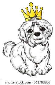 Maltese dog in golden crown sit