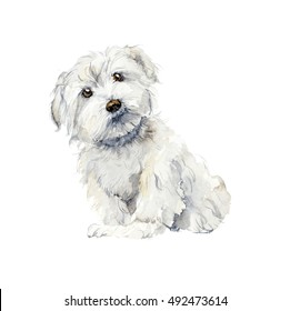 Maltese dog. Portrait small dog. Watercolor hand drawn illustration