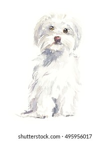 Maltese dog. Portrait small dog. Watercolor hand drawn illustration