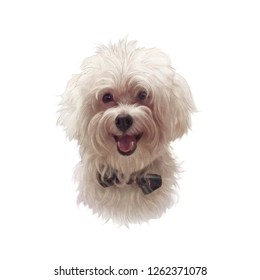 Maltese Poodle Dog isolated on white background. The Bolognese. Toy or Miniature Poodle. Cute puppy with the bow tie. Realistic hand drawn pet illustration. Animal collection: Dogs. Design template