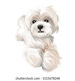 Maltese puppy, canis maelitacus, pet breed of toy type watercolor. Domestic animal of small size, realistic portarit closeup Hound from Malta, dog with long fur, muzzle of friendly canine mammal