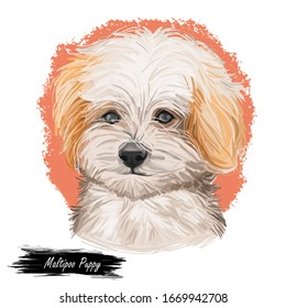 Maltipoo Puppy digital art illustration isolated on white. Cute canine dog animal, pet shop emblem, t-shirt print design. Poodle and Maltese hand drawn portrait. White cute puppy, hand drawn