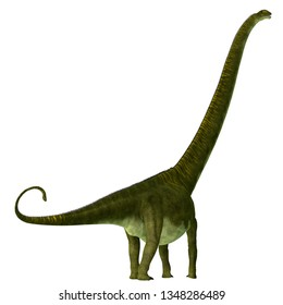 Mamenchisaurus hochuanensis Dinosaur Tail 3D illustration - Mamenchisaurus hochuanensis was a herbivorous sauropod dinosaur that lived in China during the Jurassic Period.