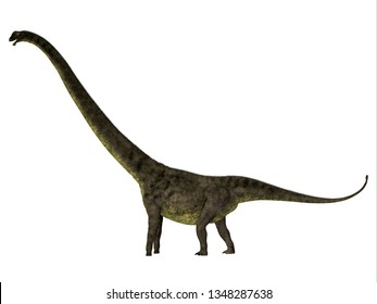 Mamenchisaurus youngi Dinosaur Side Profile 3D illustration - Mamenchisaurus youngi was a herbivorous sauropod dinosaur that lived in China during the Jurassic Period.