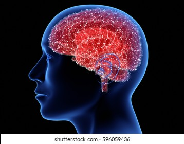 Man head with brain. 3D illustration