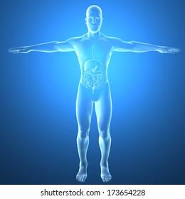 Man, intestines, x-ray anatomy, digestive system