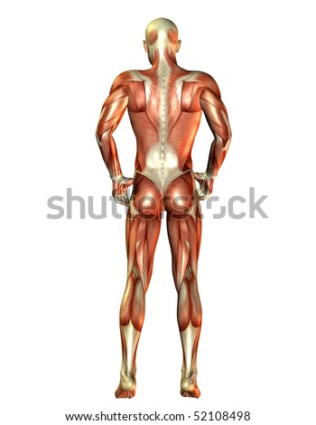 Man Muscles Back View Stock Illustration 52108498 Shutterstock