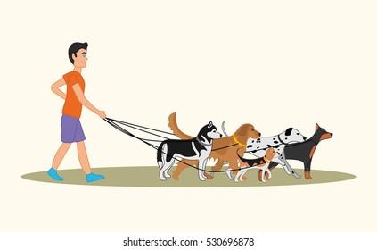 Man walking many dogs of different breeds. illustration of dog walker