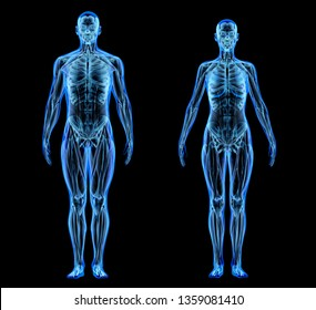 Man and woman muscle and skeletal systems. X-ray effect on black background. 3d rendering.