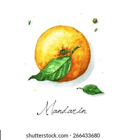 Mandarin - Watercolor Food Collection