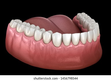 Mandibular human gum and teeth. Medically accurate tooth 3D illustration