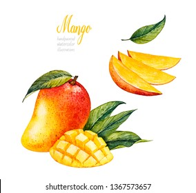 Mango. Botanical watercolor hand drawn illustration. Exotic fruit. Watercolor mango