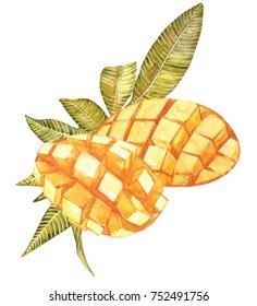 Mango cubes vintage design template. Watercolor botanical illustration. Mango Fruit Isolated on white background.