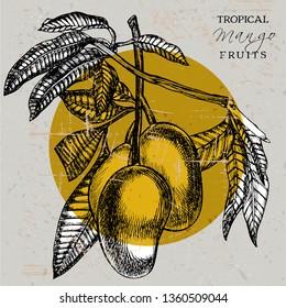 Mango tree vintage design template. Botanical mango fruit frame. Engraved mango. Graphic illustration.