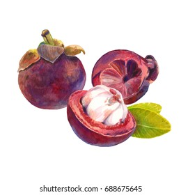 Mangosteen fruits. Watercolor and colour pencils illustration