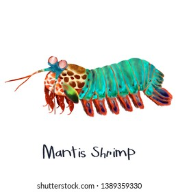 Mantis Shrimp animal realistic illustration