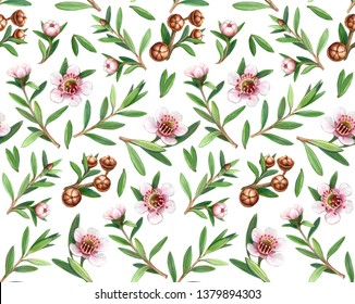 Manuka Flowers, Fruit and Leaves Pencil Drawing Seamless Pattern