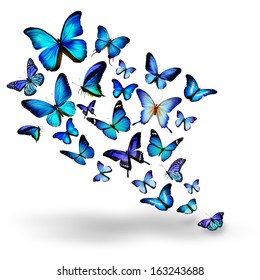 Many blue different butterflies flying