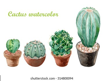 Many cactus watercolor painting on white background   ,plant exotic growth desert, for you decor created design