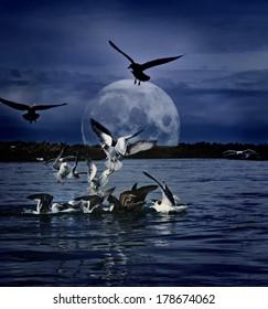 Many gulls in the water gathering at night under full moon digital art