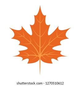 Maple leaf icon. Flat illustration of maple leaf icon for web design