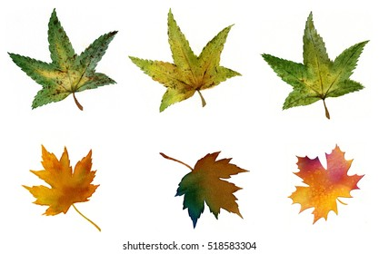 Maple Leaves Clip Cart.  Watercolor images of maple leaves on a white background.