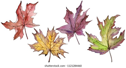 Maple leaves in a watercolor style isolated. Aquarelle leaf for background, texture, wrapper pattern, frame or border.