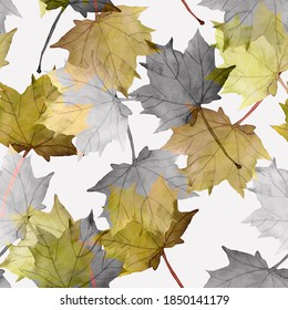 Maple leaves.Assorted autumn leaves.Art.Picture on white and colored background.