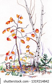 Maple with red leaves and birch in autumn