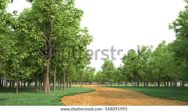 Maple tree, 3D rendering, 3D illustration