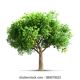 maple tree isolated 3D rendering