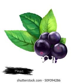 Maqui Berry Images Stock Photos Vectors Shutterstock
