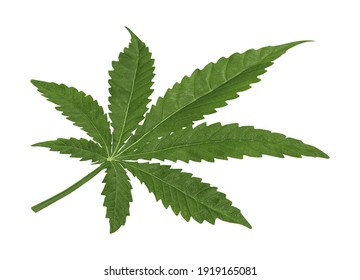 Marijuana Leaf 3D illustration on white background