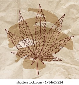 Marijuana leaf. Hand drawn narcotic cannabis design element over crumpled paper. Vintage hemp illustration with brush stroke.