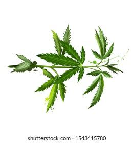 Marijuana leaf. Medical marijuana.Cannabis isolated on white. Cannabis has long been used for hemp fibre, hemp oils, medicinal purposes, and as recreational drug. Digital art illustration hand drawn