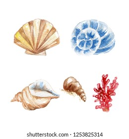 Marine Illustration Set - Sea Shells, Coral. Freehand Sketching Illustration. Ink Wash Painting. Hand Drawn Watercolor Painting on White
