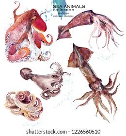 marine invertebrate animals watercolor illustration set. sea fauna. octopus. squid. cuttlefish.
