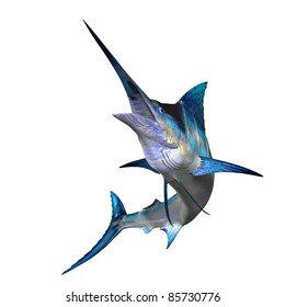 Marlin 01 - Marlins are carnivorous fish with an long body, a sail like dorsal fin and a spear shaped bill. It is found throughout tropical waters of the oceans.