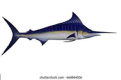 Marlin fish - 3D render